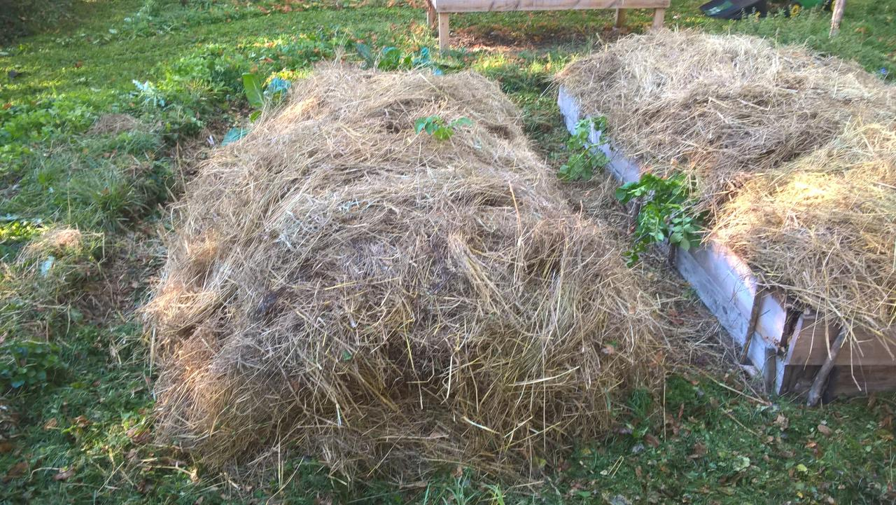 Permaculture for Permaculture terrasses et buttes